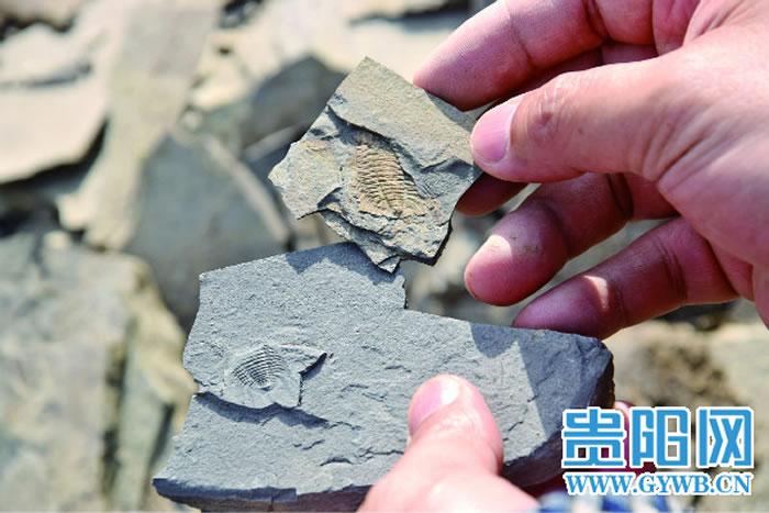 随手打开石头,可见古生物化石