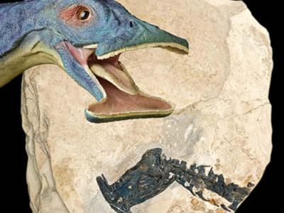 """中国科学家复原奇特海洋爬行动物化石""""锥子头海怪""""——""""奇异滤齿龙"""""""