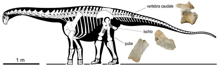 意大利发现南欧最古老的蜥脚类恐龙