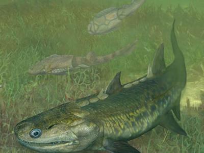 晨晓弥曼鱼再研究为解开辐鳍鱼类起源之谜提供新证据