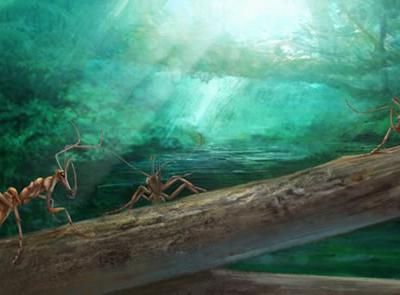 欧亚大陆白垩纪琥珀中最原始的蚂蚁及其社会化起源