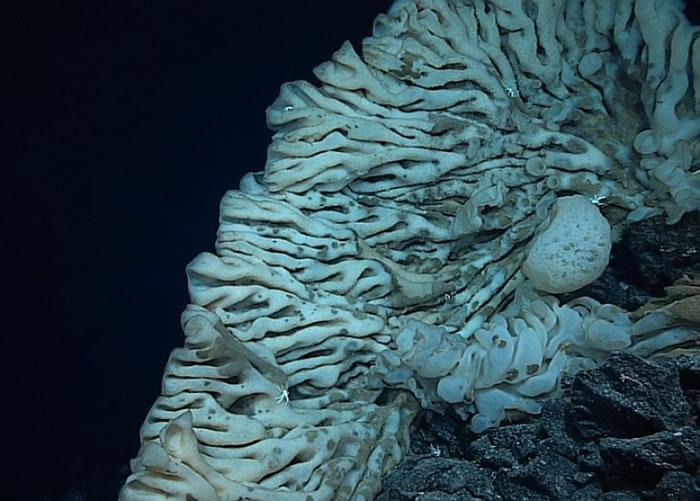 美国夏威夷2100米深海惊现全球最大海绵 体积等同小型货车