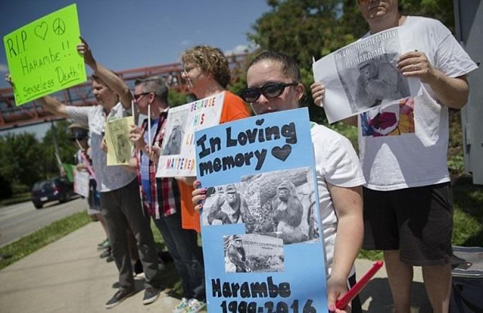 民众举起纸牌,哀悼哈兰贝。