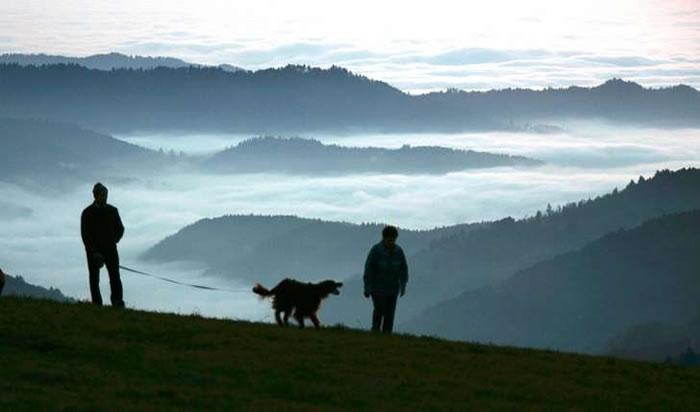 狗可能在欧亚西部和东亚分别进化了两次