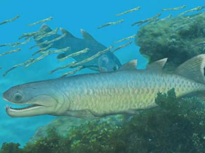 4.1亿年前的掠食鱼类箐门齿鱼揭示肉鳍鱼类早期演化格局