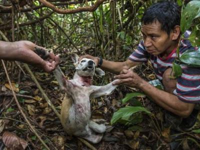 秘鲁马努国家公园内的马奇健格部落那些死后化身为美洲豹的村民