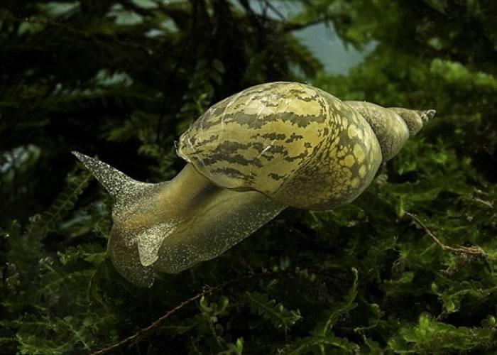 蜗牛吃不吃东西只需用两个脑细胞决定