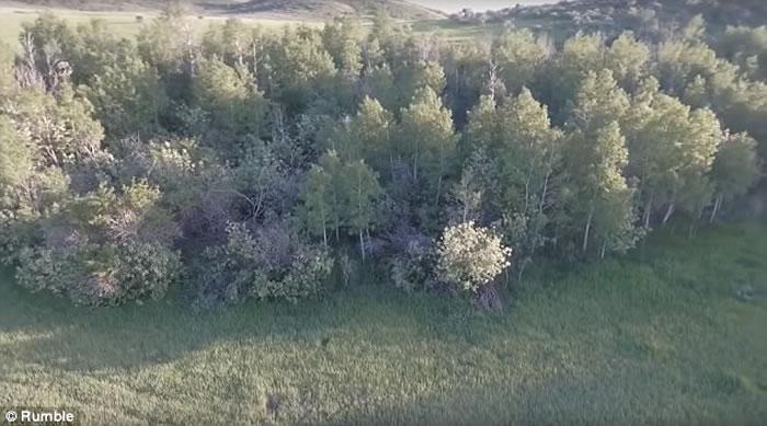 美国爱达荷州无人机航拍到一只全身红棕体毛用2条腿奔跑的大脚怪?