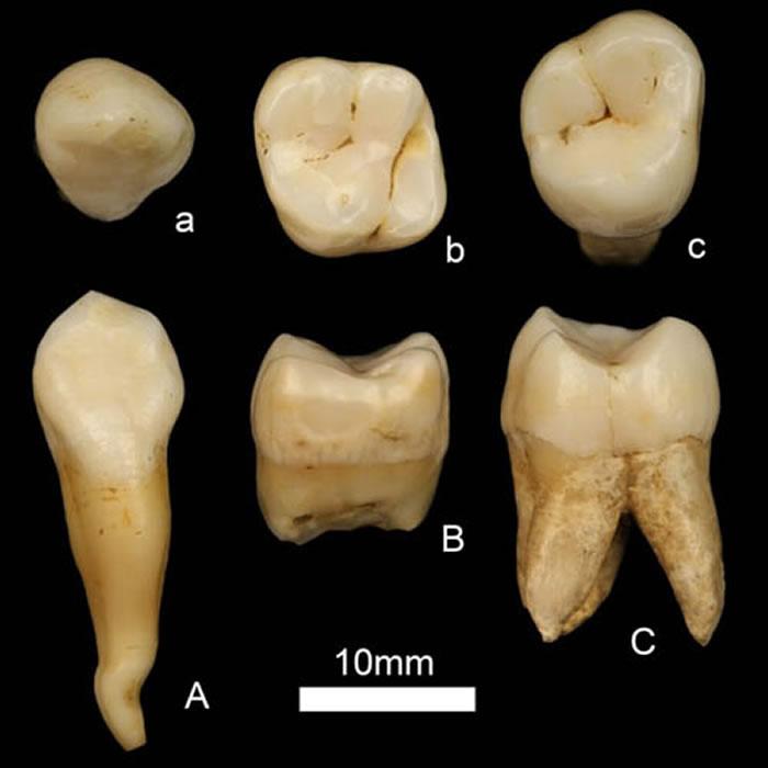 古人类化石 (赵凌霞供图)