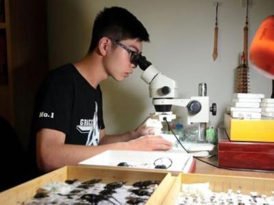 浙江绍兴诸暨市17岁高中生赵铁雄两度发现新品种隐翅虫