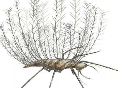 中生代琥珀研究发现一亿年前远古昆虫就拥有拟态能力