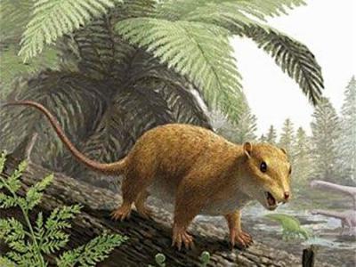日本福井县立恐龙博物馆发现1.2亿年前恐龙时代哺乳动物化石