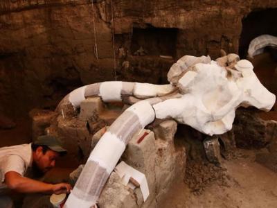 墨西哥发现万年前猛犸象骨架化石
