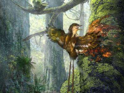 科学家首次在缅甸琥珀中发现恐龙时代古鸟类