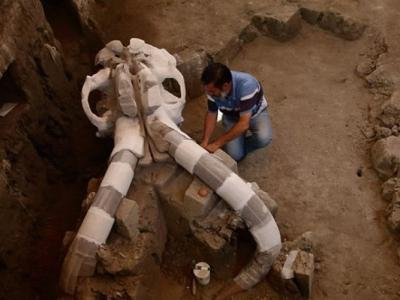 墨西哥发现1.4万年前长毛象骸骨
