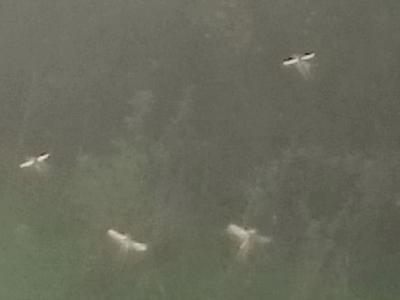 """英国威尔斯郊外拍到""""仙子""""林中飞舞?"""