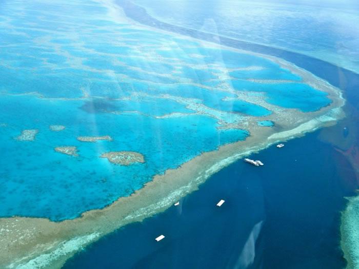 珊瑚裸尾鼠栖息在大堡礁附近一带。