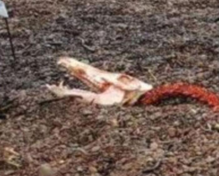 """动物组织""""Help2Rehome""""在facebook贴出""""尼斯湖水怪""""残肢照片"""
