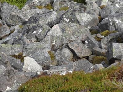 你能找到照片中的北爱尔兰松鸡吗?