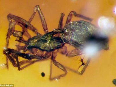 9900万年前缅甸琥珀中发现远古盔蛛科蜘蛛新物种:身披盔甲