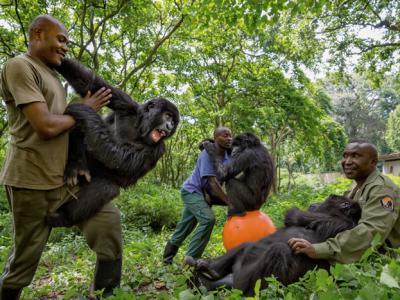 刚果民主共和国维龙加国家公园之役