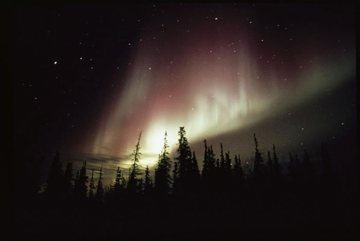 在加拿大,高耸的树木就像要碰触到明亮的极光。 PHOTOGRAPH BY NORBERT ROSING, NATIONAL GEOGRAPHIC CREATIV
