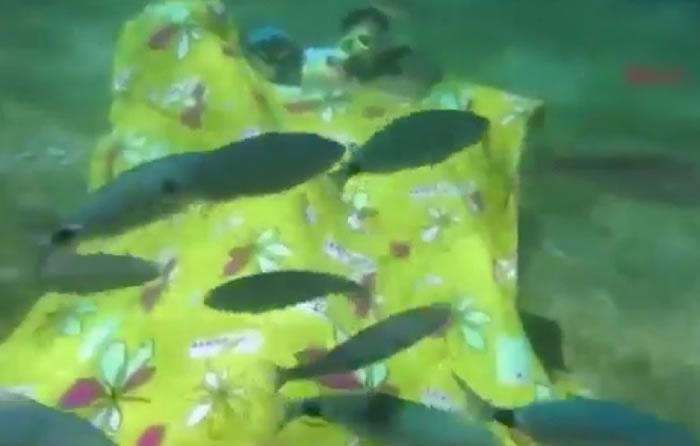 """土耳其两名男子到8米水底中与海洋生物""""同眠"""" 唤醒公众保护海洋"""