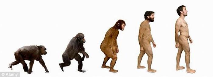 之前研究显示人类大约4万年前已停止进化,但是近期研究表明人类处于缓慢进化,繁殖成功相对寿命与教育程度具有负相关性。