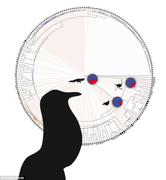 研究人员为了解鸟类独特的发声器官起源和演化过程,从208种鸟中找出52种能闭嘴出声的鸟,发现只有鸽子那种体型较大的鸟类能如此出声。
