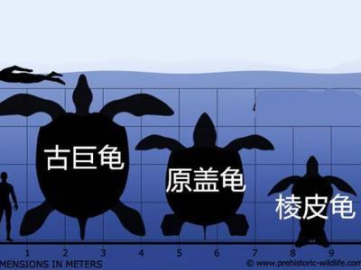 最新研究认为乌龟进化出龟壳是适应环境的表现 不是为了保护