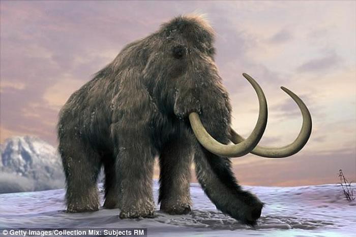 科学家表示,如果能将猛犸象复活、重新引入生态系统之中,或许就能将冻原重新变回草原,从而将永久冻土层与大气隔离开来,阻止温室气体的逃逸。猛犸象约在1万年前从地球上
