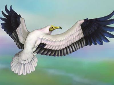 甘肃临夏盆地中新世发现胡兀鹫类新种——长嘴中新近白兀鹫