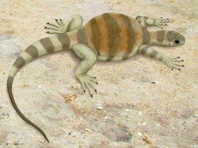 乌龟为适应环境而进化出龟壳 助掘洞藏身