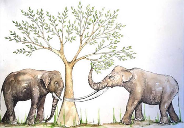 华南晚更新世象类生态复原图,亚洲象(左)的食性中草食的比例较大,剑齿象(右)主要食嫩叶(Nicola Heath绘)
