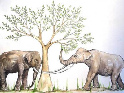 华南更新世化石长鼻类的食性研究取得新进展