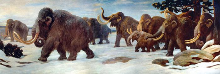 干燥气候与海平面上升驱动最后的真猛犸象种群走向灭绝