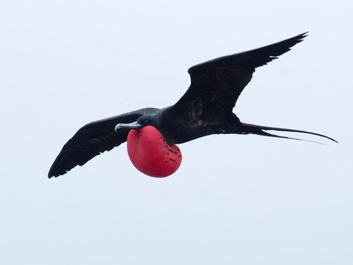 最新研究表明鸟类能够在空中飞行时进行小憩