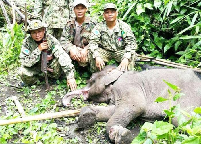 小野象因护林局缺乏急救设备而失救枉死。