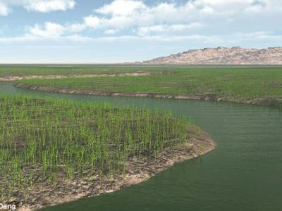 早期维管植物遗存提供亚洲最早的有根土壤床证据