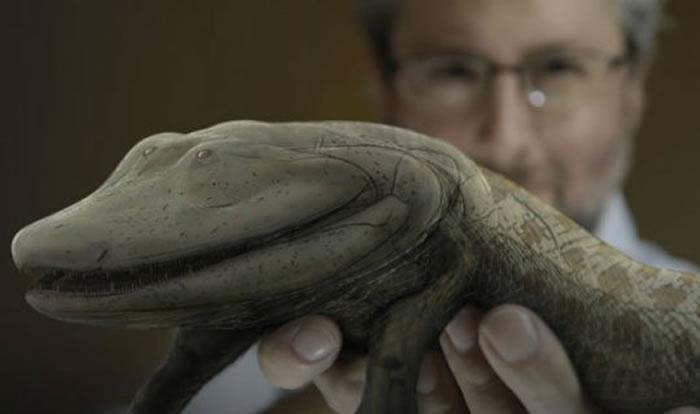 新研究探索脊椎动物进化中成对附肢起源的遗传基础