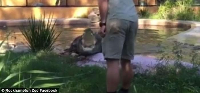 澳洲动物园鳄鱼塑料瓶卡喉 职员用木棒挑衅迫其吐出