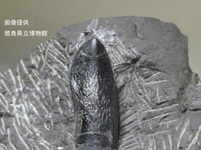 日本德岛1.3亿年前白垩纪地层中发现国内最古老蜥脚类恐龙牙齿化石