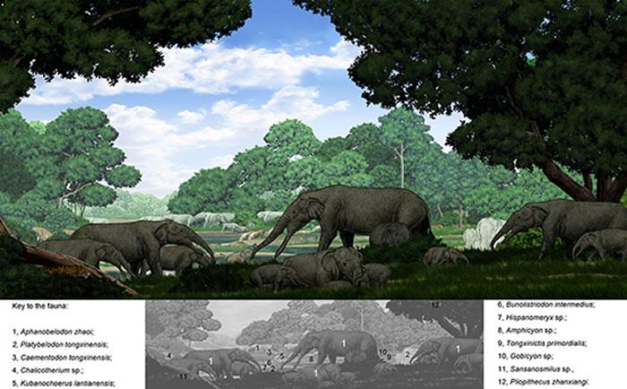 隐齿象生存环境复原图(陈瑜绘)