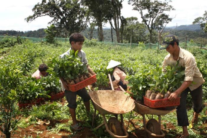 """这些从泥土中冒出来的""""黑金"""",仍未能为农民带来稳定的生活。"""