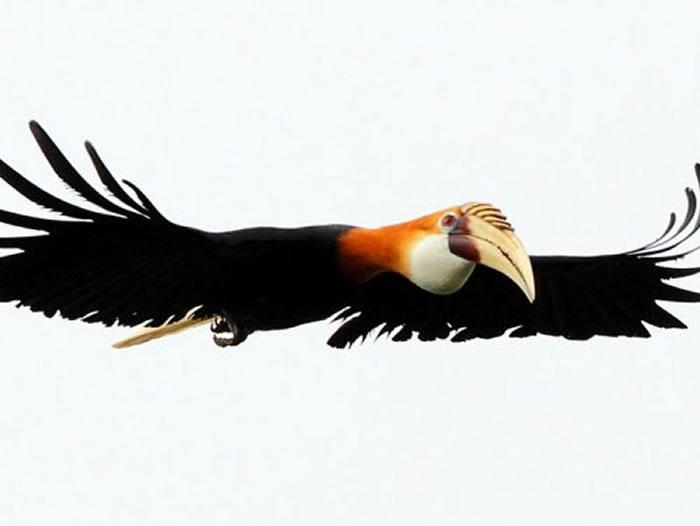岛屿鸟类生物多样性与岛屿鸟类物种的灭绝脆弱性之间存在联系
