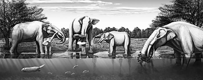 中中新世铲齿象动物群生态环境复原。朱莉·瑟兰绘