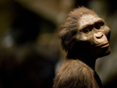 """最新研究认为320万年前南方古猿阿法种""""露西""""是从树上失足摔死"""