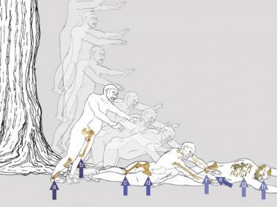 """320万年前""""人类祖母""""露西很可能是从树上摔下而死亡"""