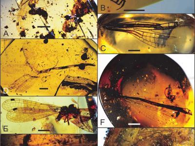 中生代蜻蜓总目化石研究取得系列进展