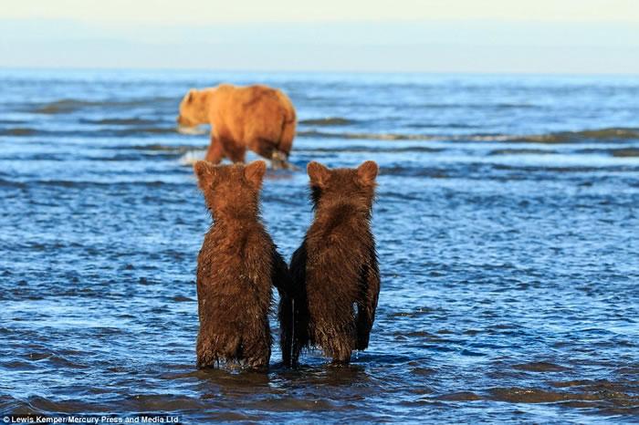 美国阿拉斯加两只小棕熊手牵手站在岸边等妈妈捕鱼回来
